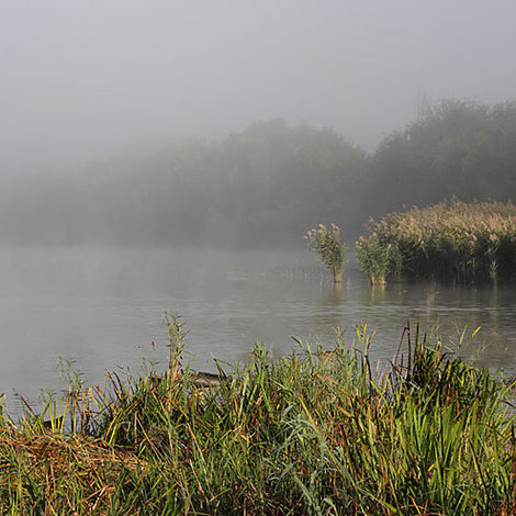 Why is there fog on my pond in the mornings?
