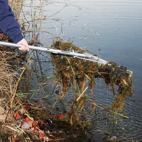 Removing Dead Vegetation