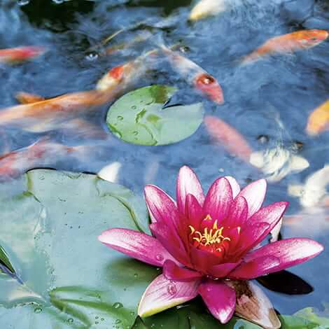 How to Pick Pond Plants
