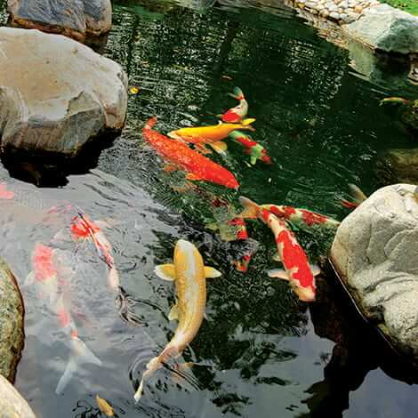 Preventing Sick Fish