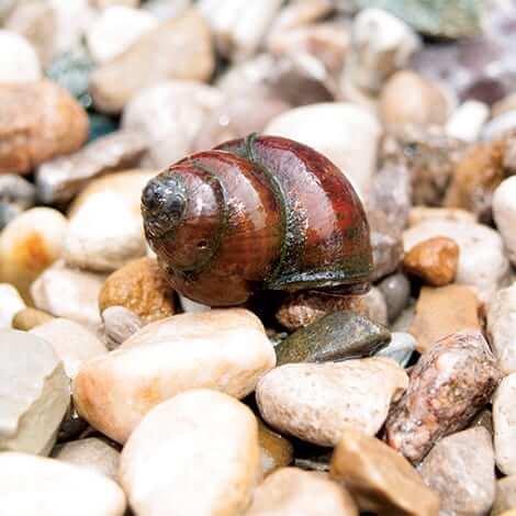 Snails 101