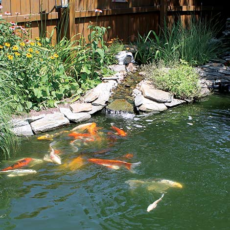 Types of Algae in a Water Garden