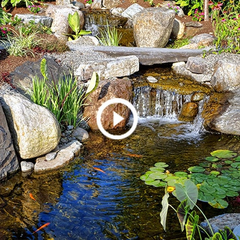 Water Gardens 101