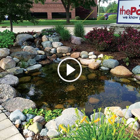 Why Aerate Your Water Garden