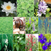 Aquatic Plant Package - Large