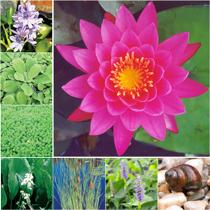 Aquatic Plant Package - Medium
