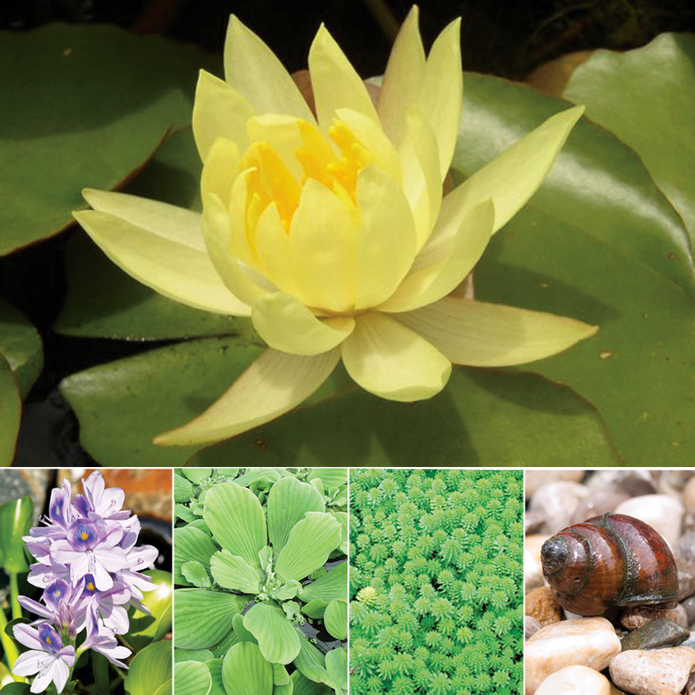 Aquatic Plant Package - Small